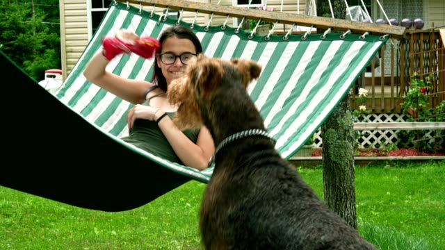 vídeos de stock e filmes b-roll de 15 years old teenager girl lying in the hammock and playing with her airedail terrier dog. - 14 15 years