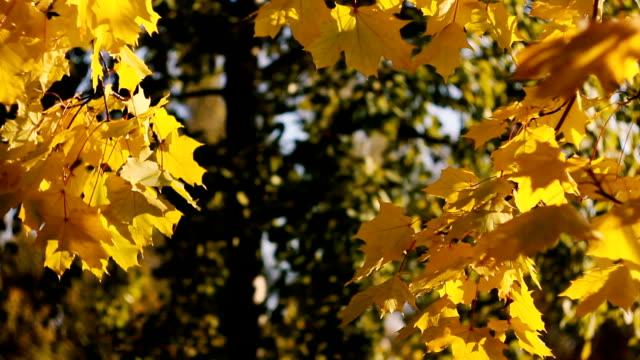 Gelbe Herbst Hintergrund