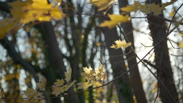 yellow autumn leaves flutter in the wind on november 28 during the thanksgiving weekend in baltimore, maryland. covid-19 cases are expected to surge... - branch stock videos & royalty-free footage