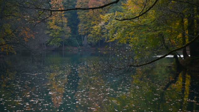 Yellow Autumn Leaves on The Lake
