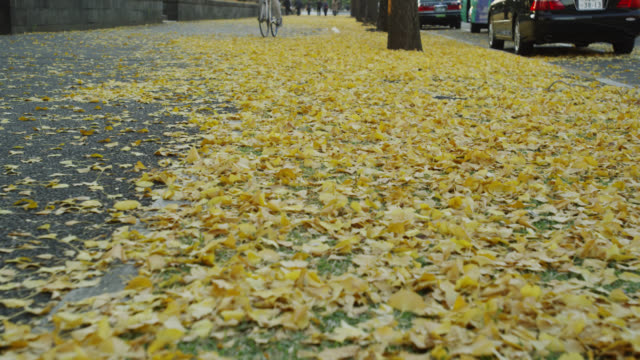 yellow autumn leaves - pedestrian walkway stock videos & royalty-free footage