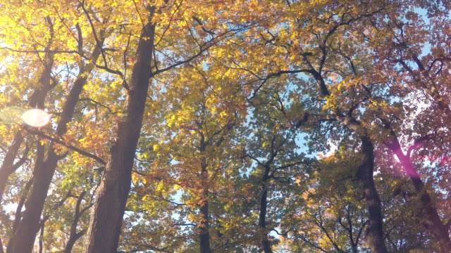 gelbe herbst blätter  - von bäumen gesäumt stock-videos und b-roll-filmmaterial