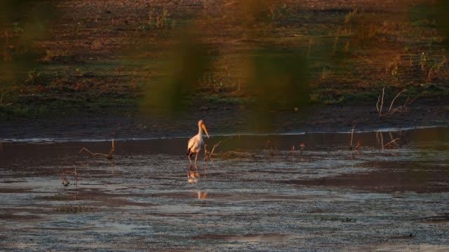 gelbe gekleitfärchen fangen fischen - krüger nationalpark stock-videos und b-roll-filmmaterial