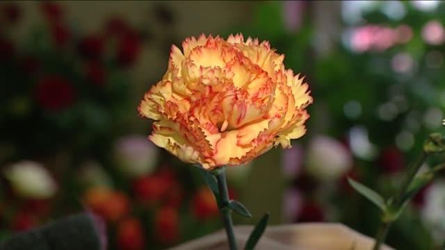 vidéos et rushes de yellow clove - composition florale