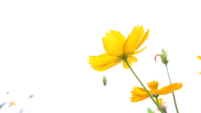 4k: yellow daisy field - floral pattern stock videos & royalty-free footage