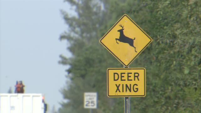 ms yellow deer xing sign / florida keys, florida, usa - animal crossing sign stock videos & royalty-free footage