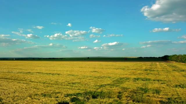 vídeos y material grabado en eventos de stock de campo amarillo de la colza maduro - horizonte sobre tierra