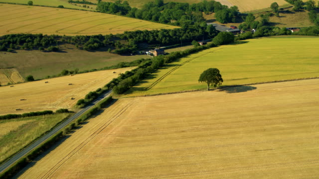 yellow fields & trees after harvest, north yorkshire, england - cricket stump stock videos & royalty-free footage