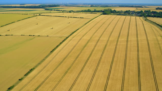 yellow fields with furrows after harvest, thwing, north yorkshire, england - cricket stump stock videos & royalty-free footage