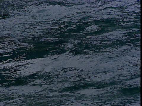 Yellow fin tuna feed on chum at surface, Japan