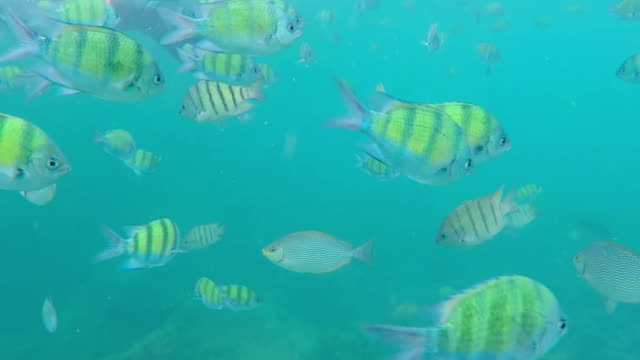 Yellow Fishes underwater