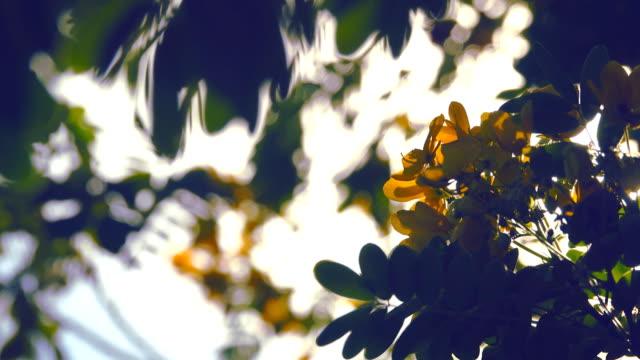 stockvideo's en b-roll-footage met gele bloem op zonlicht - bloemhoofd