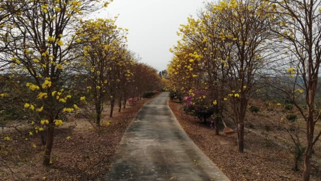 yellow flowering plant at nan thailand - flowering plant stock videos & royalty-free footage
