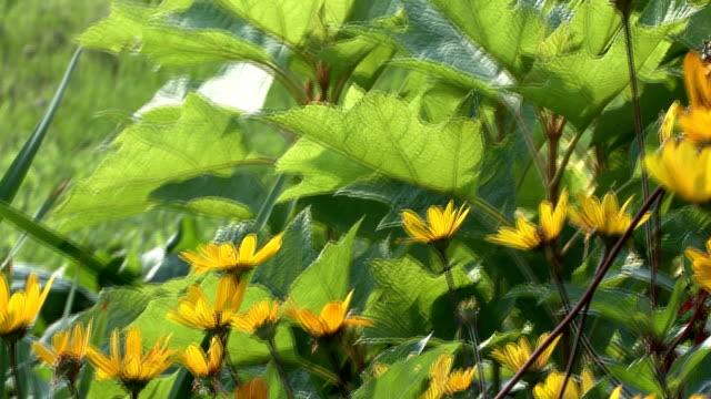 Gelbe Blumen und eine Biene