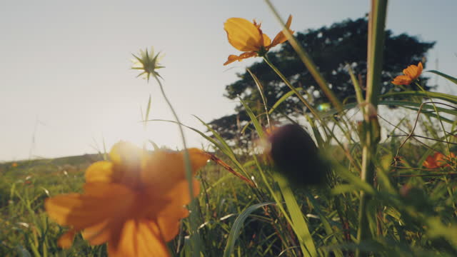 yellow flowers and trees in sunlight. - wonderlust stock videos & royalty-free footage