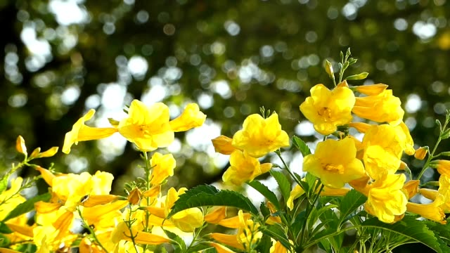 yellow flowers blowing in the wind - giallo video stock e b–roll