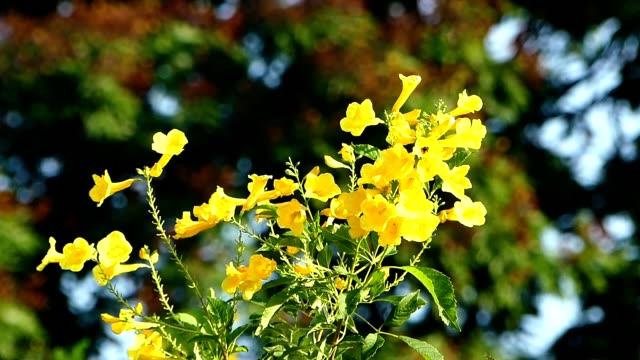 Yellow flowers blowing in the wind