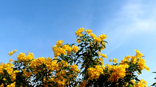 yellow flowers blowing in the wind - soft cloud sky stock videos & royalty-free footage