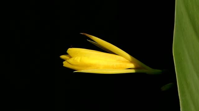黄色の花が風に吹かれて - 花粉点の映像素材/bロール