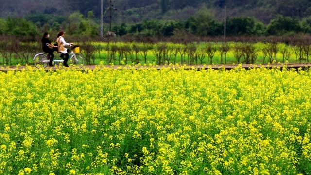 vídeos y material grabado en eventos de stock de amarillo flores de campo - monocultivo