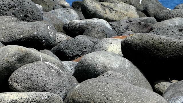 vídeos y material grabado en eventos de stock de yellow iguana on rocks in galapagos - iguana de los galápagos