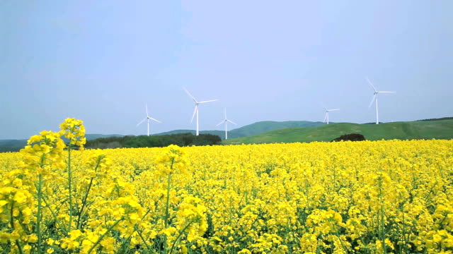yellow landscape with turbines - plusphoto stock videos & royalty-free footage