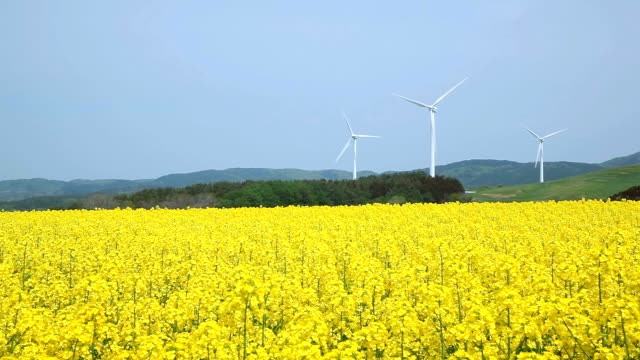 Yellow landscape with turbines