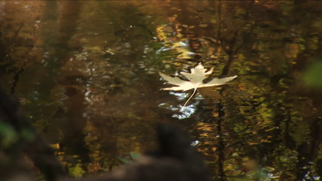 yellow leaf floating - part 3 of three - floating on water stock videos & royalty-free footage