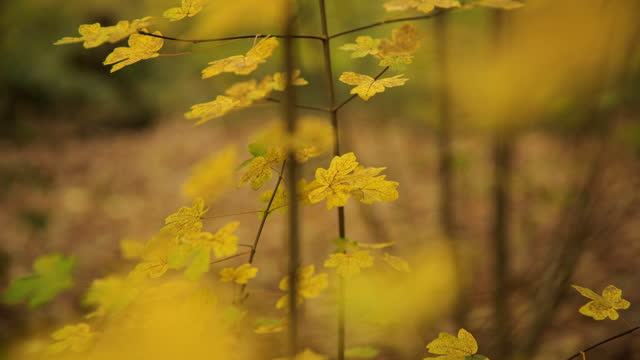 yellow leaves in autumn woodland - ecosystem stock videos & royalty-free footage
