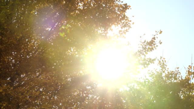 gelbe blätter des ginkgo mit sonnenlicht - ginkgobaum stock-videos und b-roll-filmmaterial