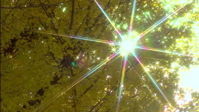 vídeos de stock, filmes e b-roll de amarelas folhas de ginkgo com luz solar - plusphoto