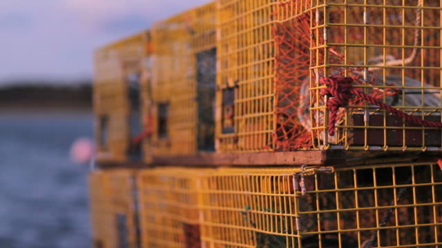 vidéos et rushes de yellow lobster cages in front of blue water - maine
