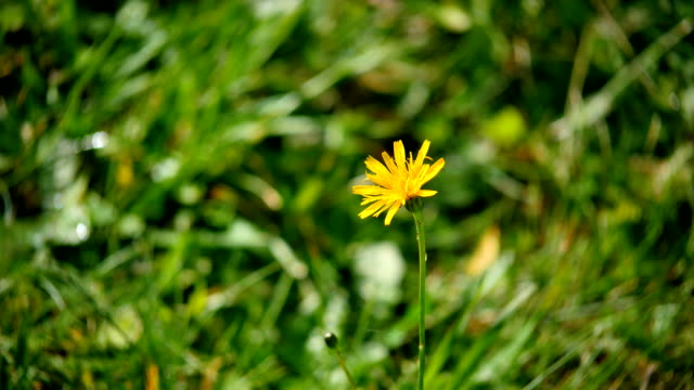 Yellow Lone Flower HD