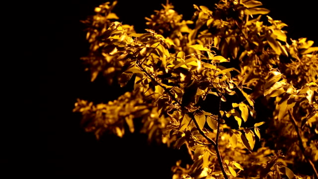 yellow nature background - branch stock videos & royalty-free footage