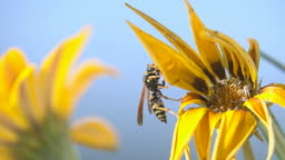 Yellow nature fly insect blue sky