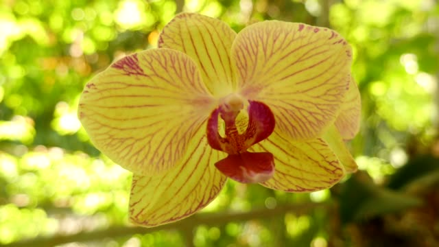 yellow orchid flower - orchid stock videos & royalty-free footage