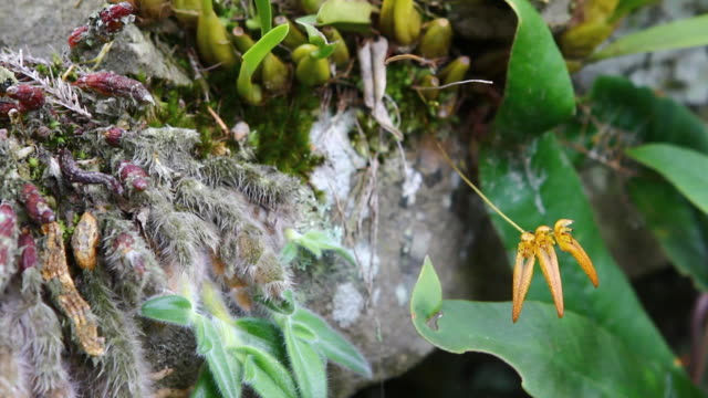 yellow orchid - orchid stock videos & royalty-free footage