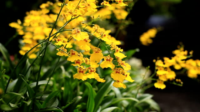 yellow orchid. - orchid stock videos & royalty-free footage
