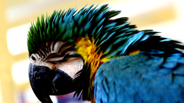 yellow parrot - scarlet macaw stock videos and b-roll footage
