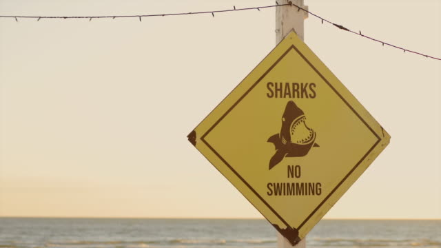 vídeos de stock, filmes e b-roll de yellow rhombus sharks: no swimming sign at ocean in australia with blurry background at sunset and copy space - rombo