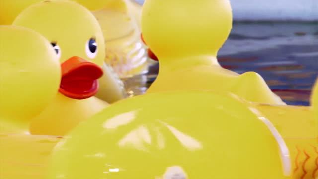 CU, Yellow rubber ducks floating, Vancouver, Washington