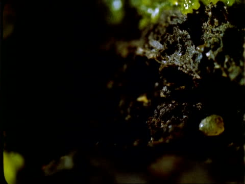 t/l yellow slime mould growth over log, pulsating, cu, panama. - 微小生物点の映像素材/bロール