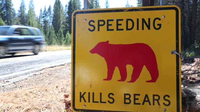 yellow spped kills bears sign in yosemite national park, each sign marks a spot where a bear has been killed by traffic, california, usa. - yosemite national park stock videos & royalty-free footage