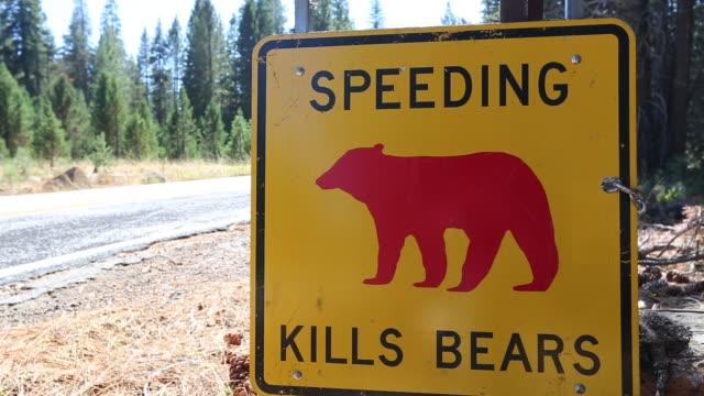 a yellow spped kills bears sign in yosemite national park, each sign marks a spot where a bear has been killed by traffic, california, usa. - todesopfer stock-videos und b-roll-filmmaterial