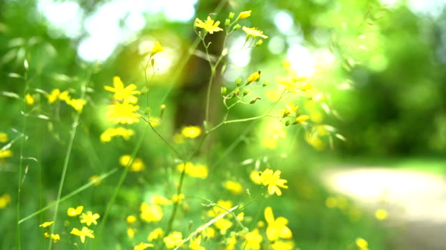 yellow wild flowers - wildflower stock videos & royalty-free footage