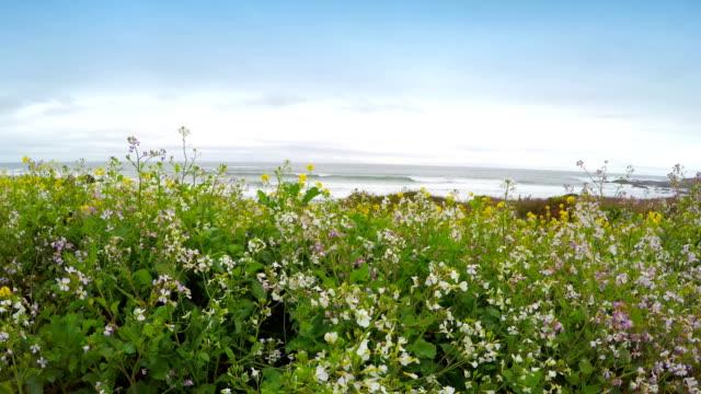vidéos et rushes de jaunes fleurs sauvages - plante sauvage