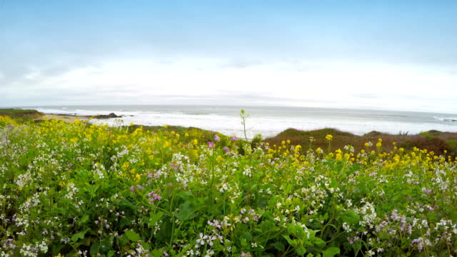 yellow wildflowers - north pacific stock videos & royalty-free footage