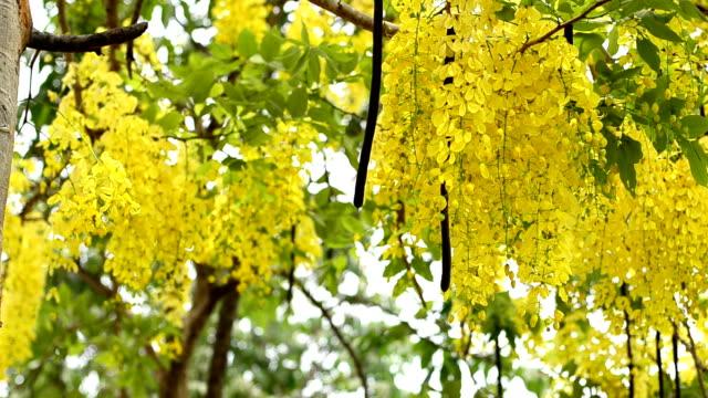 yellower flowers - bländare bildbanksvideor och videomaterial från bakom kulisserna