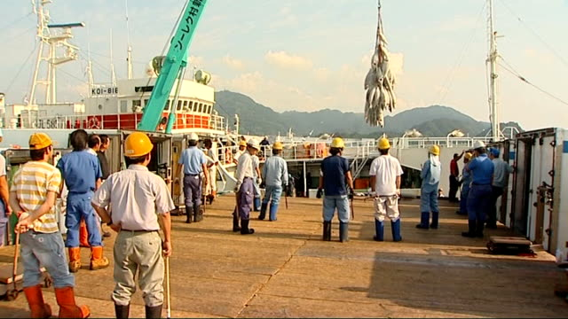 yellowfin tuna unloaded at yaizu fishing port ext fishing industry workers unloading large consignment of frozen yellowfin tuna from hold of boat by... - catch of fish stock videos & royalty-free footage