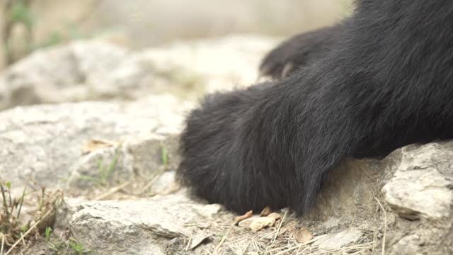 yellowstone - bear / wyoming, united states - animal head stock videos & royalty-free footage